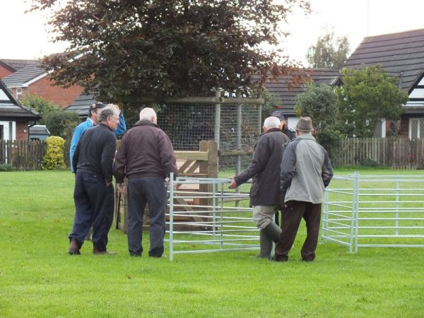 Farmers setting up the pens