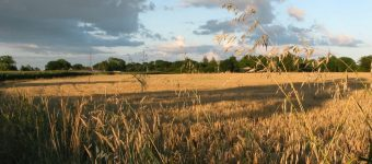 480 New Homes for Haslington?